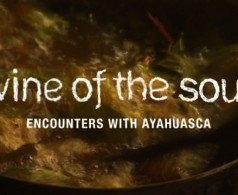 vine of the soul screening